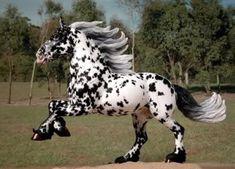 Noriker stallion #horse #equine