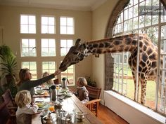 ARE YOU KIDDING ME?! I am feeding a giraffe someday from the comfort of my home.