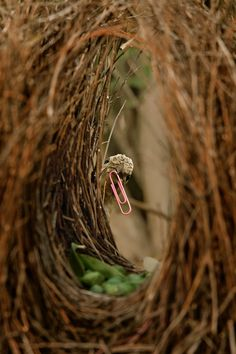 Photo of a bowerbird holding a paperclip in its beak. Decorating ideas.