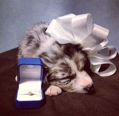 Dog With Ring Box