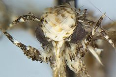 Newly discovered moth named after Trump   Scientists have named a new species ofmoth after Donald Trump U.S. president-elect.  The moth has golden flake hair similar to Trumps.  It is officially described as Neopalpa donaldtrumpi the News Agency of Nigeria reports.  Vazrick Nazari an evolutionary biologist from Ottawa said with its hair tufts its presence in U.S. and Mexico and its fragile habitat that needs conservation I really did not have any choice with this one other than to name the…