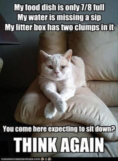 #pickycat #catsrule #catmeme Cat won't let you sit down?  here's why