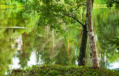 Ann-Kristina Al-Zalimi, järvi, kesä, suomi, koivu, tyyni, lake, finland, summer, calm, finnish landscape, skandinavia