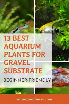 In this blog post, I'm going to show you the best aquarium plants for gravel substrate. Most of these plants are very easy to care and beginner-friendly. #aquariumplants #liveaquariumplants #aquarium Freshwater Aquarium Plants, Live Aquarium Plants, Tropical Aquarium, Planted Aquarium, Live Plants, Fast Growing Flowers, Fast Growing Plants, True Roots, Shrimp Tank