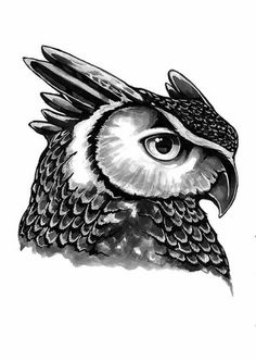 Stine Hvid - Eagle owl - illustration