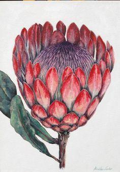 'Protea'. Oil on canvas. 0,6 x 0,4m