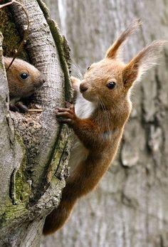 Come and play ! / Allez, viens jouer ! / Squirrels. / Ecureuils.