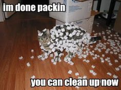 Funny Animal Pictures cat memes Just like cat funniest animals cat fun cat awesome) Funny Moving Pictures, Funny Cat Photos, Funny Animal Pictures, Animal Pics, Daily Pictures, Random Pictures, Zoo Animals, Funny Animals, Cute Animals