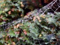 Wunderbare Motive im Spätsommer | Altweibersommer – Tau im Spinnennetz (c) Frank Koebsch (2)