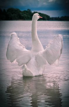 Snow Goose by Оленька Колесникова.