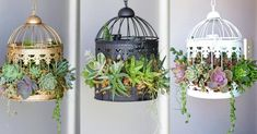 Stop and Admire These Charming Succulent Birdcages — Then DIY Them! If you've scrolled through Insta Propagating Succulents, Succulent Gardening, Succulents Garden, Garden Pots, Succulent Ideas, Container Plants, Container Gardening, Birdcage Planter, Indoor Water Garden