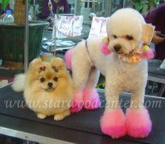 creative dog grooming school in Thailand....