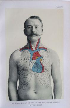 Antique 1900s Medical Diagram Scientific Print Human Anatomy Heart Chest 1908   eBay