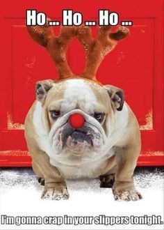 funny animal pictures of the day 24 pics dog christmas