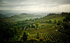 An Untitled Shot Of The Countryside .  San Gimignano, Italy.