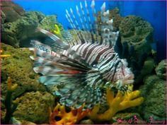 oceanos peixes - Pesquisa Google