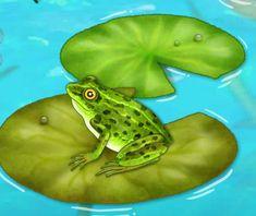 [어린이 자연관찰] 올챙이 성장과정과 개구리의 특징에 대해 알아보자(+영상) : 네이버 블로그 Animals, Animales, Animaux, Animal, Animais