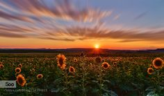 Glowing Sun by MarkVeePhotography. Please Like http://fb.me/go4photos and Follow @go4fotos Thank You. :-)