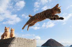 """一度は撮りたい""""跳び猫""""写真の撮り方をFBで人気の五十嵐さんに聞いてみた - Excite Bit コネタ(1/4)"""