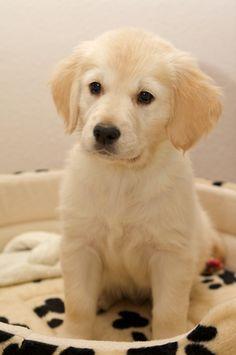 Easy Dogs / Trennungsangst bzw. Trennungsstress – Vorbeugen, Teil 3, Maria Rehberger, Easy Dogs Nürnberg