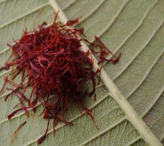 Saffron kitchen spice herbs 1g at Rs.200
