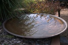 This copper bird bath is spun by a local metal spinner. It is wide and shallow so that it will occasionally dry out, inhibiting mosquito populations. Metal Bird Bath, Bird Bath Bowl, Metal Birds, Backyard Garden Design, Ponds Backyard, Bird Bath Garden, Bird Bath Fountain, Garden Pond, Forest Garden