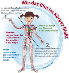 How the blood flows in the body - science elementary Εκπαίδευση Wie das Blut im Körper fließt Elementary Science, Science Classroom, Science Education, German Language Learning, Learn German, Primary School, Blood, Knowledge, Teaching