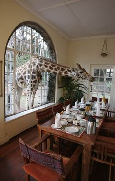 Giraffe Manor, Nairobi, Kenya Debating whether or not I should shell out the big bucks for this experience...