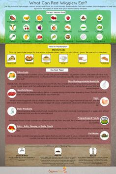 Gardening Compost What Can Red Wiggler Worms Eat? - Infographic - Confused about which foods are safe for your composting worms? This infographic will help you figure out what your red wiggler worms can and cannot eat. Red Worm Composting, Compost Tea, Garden Compost, Red Wiggler Worms, Worm Beds, Red Wigglers, Red Worms, Backyard Aquaponics, Earthworms