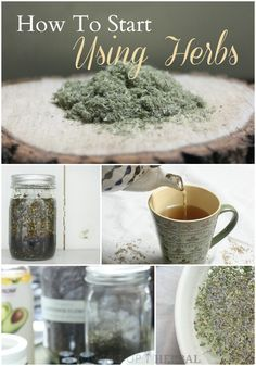 How To Start Using Herbs | Growing Up Herbal | Interested in learning how to use herbs for your family? Come along with me in this new series, and I'll show you how!