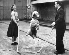 maudelynn: John Chipperfield practices a skipping rope trick with a French Poodle before his performance at Tom Arnold's Harringay Circus, London, 6th January 1950