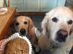 We're having some of that, right? #DoggyMember Ollie and Molly