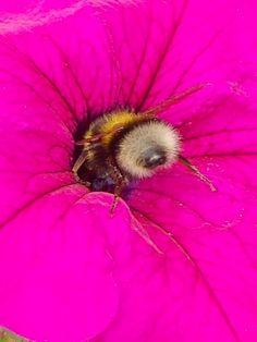 Ah Nectar! By B Lowe