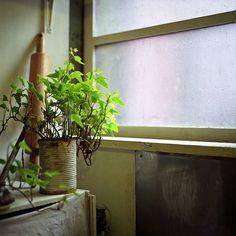(ku)nihito flickr