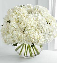 centerpiece idea - Classic White Hydrangea