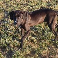 Panama City Fl Pointer Meet Kona A Pet For Adoption Animal