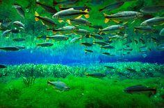 Pantanal - Mato Grosso do Sul - Brasil