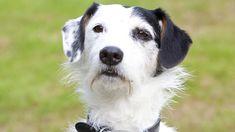 Midsomer Murders Dog Sykes Breed
