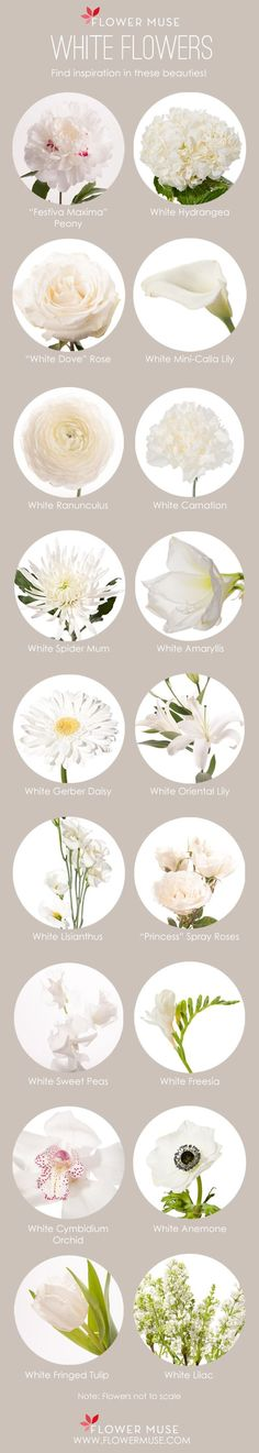 It's post Memorial Day so white is no longer a fashion faux pas! In light of this, we share our favorite white flowers to inspire your next floral creation!