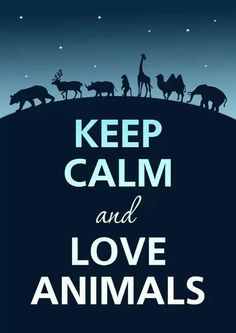 """Keep calm and love chemistry. the only """"Keep calm"""" poster that speaks to us. Keep Calm Posters, Keep Calm Quotes, Keep Calm And Love, My Love, Funny Animals, Cute Animals, Funny Dogs, Wild Animals, Baby Animals"""