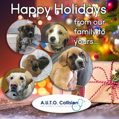 We wish you a Merry Christmas. Cherish the unconditional gifts that keep on giving. Auto Collision, Collision Repair, Auto Body Repair, The Body Shop, Merry Christmas, Gifts, Animals, Merry Little Christmas, Animais