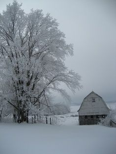 Barn and huge tree in winter (1) From: FlickR, please visit