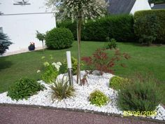 1000 images about jardin exotique on pinterest google search and minerals - Massif avec palmier ...