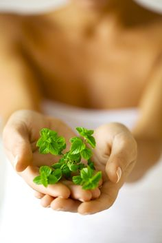 herbs for thyroid health