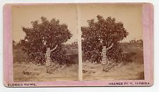 Orange City Florida Stereoview By MM & WH Gardner of Atlanta Georgia #19
