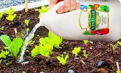 Když máte svou zahradu nebo zahrádku, určitě si ji užíváte v každém směru.Nebo se o to alespoň snaž Heinz Vinegar, Vinegar Uses, Vinegar And Water, White Vinegar, Garden Insects, Garden Pests, Garden Tools, Fruit Bearing Trees, Fruit Trees
