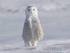 Resultado de imagem para beautiful animals