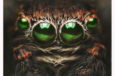 怪物?―毛までとらえたクモのクローズアップ写真 - WSJ