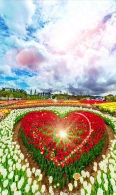Beautiful Flowers Wallpapers, Beautiful Photos Of Nature, Beautiful Nature Wallpaper, Beautiful Gif, Beautiful Roses, Nature Pictures, Sci Fi Wallpaper, Flower Wallpaper, Galaxy Wallpaper