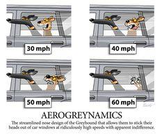 Greyhound Memes |
